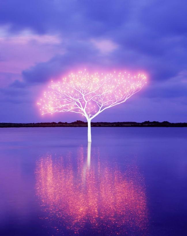 arbre lumière